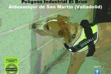 Primera Copa DogVall Detección (22 y 23/04/2016)
