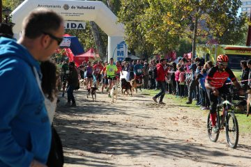 Crónica Canicross Series Valladolid 2016